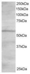 AP16181PU-N - OSBPL2