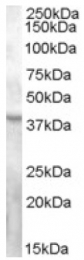 AP16802PU-N - GPR119