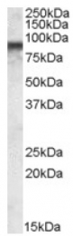AP16839PU-N - COG7