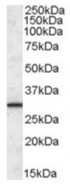 AP16841PU-N - ERP29