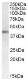 AP16719PU-N - MC2-R