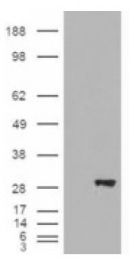AP16720PU-N - BDH2