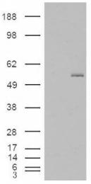 AP16723PU-N - GCNT3