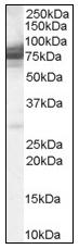 AP08569PU-N - IFT74