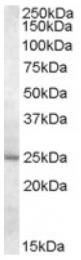 AP16754PU-N - MTHFS