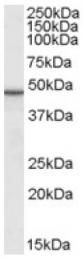AP16619PU-N - TIP47 / M6PRBP1
