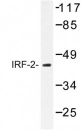 AP06668PU-N - IRF2