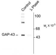 AP08672PU-N - GAP43