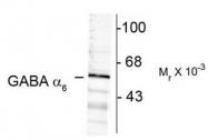 AP08657SU-N - GABAA Receptor alpha 6