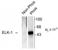 AP08641PU-N - ELK1