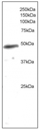 AP08603PU-N - NCF1