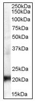 AP08786PU-N - CBX3