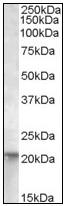 AP08843PU-N - NRAS