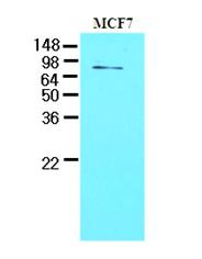 AM09086PU-N - TDP1