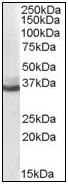 AP08974PU-N - AKR1C4