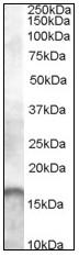 AP08912PU-N - AIF1