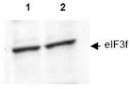 AP09323PU-N - EIF3F / EIF3S5