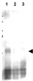 AP09316PU-N - MER2