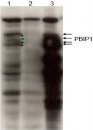 AP09399PU-N - MLF1IP