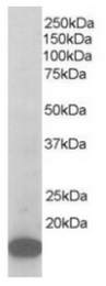 AP16235PU-N - ARPC3 / ARC21