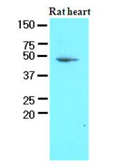 AM09090PU-N - PDK1