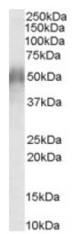 AP16250PU-N - CD2BP2
