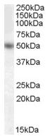 AP16686PU-N - EGR4