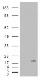 AP16678PU-N - PLA2G1B