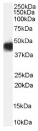 AP16556PU-N - Malcavernin