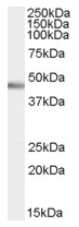 AP16594PU-N - PTF1A
