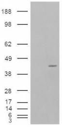 AP16575PU-N - NCF-4