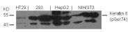 AP09459PU-S - Cytokeratin 8