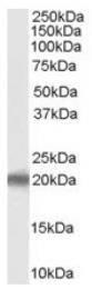 AP16484PU-N - PERP