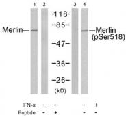 AP02513PU-S - Merlin