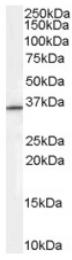 AP16464PU-N - RNF115