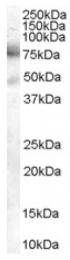 AP16458PU-N - DCP1A