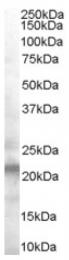 AP16446PU-N - VPS25