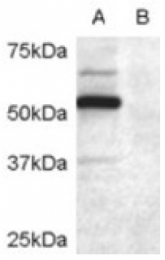 AP16442PU-N - DCDC2