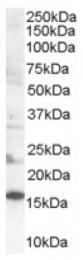 AP16434PU-N - SH2D1A