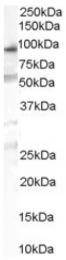 AP16426PU-N - OSBPL10