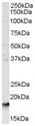 AP16418PU-N - CD235a / GYPA