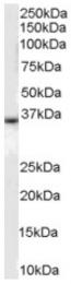 AP16414PU-N - CD234 / DARC