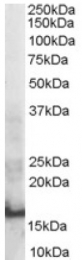 AP16387PU-N - SH2D1A