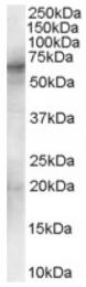 AP16384PU-N - SYK