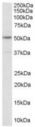AP16378PU-N - Serotonin receptor 2C (HTR2C)