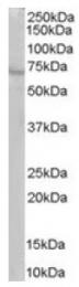 AP16290PU-N - RIC8A