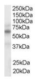 AP16281PU-N - NR1H2 + NR1H3