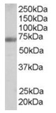 AP16273PU-N - Formin-binding protein 1