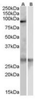 AP16272PU-N - SCARF1