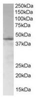 AP16266PU-N - SAMSN1